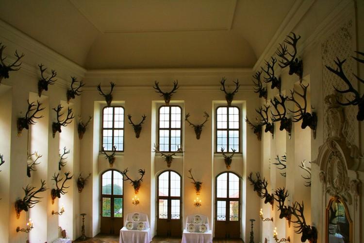 Много голов лосей на стенах гостиной